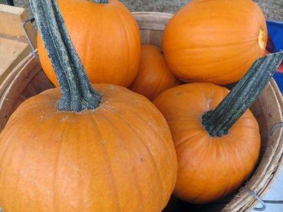 pumpkin-basket-1473772842-5725